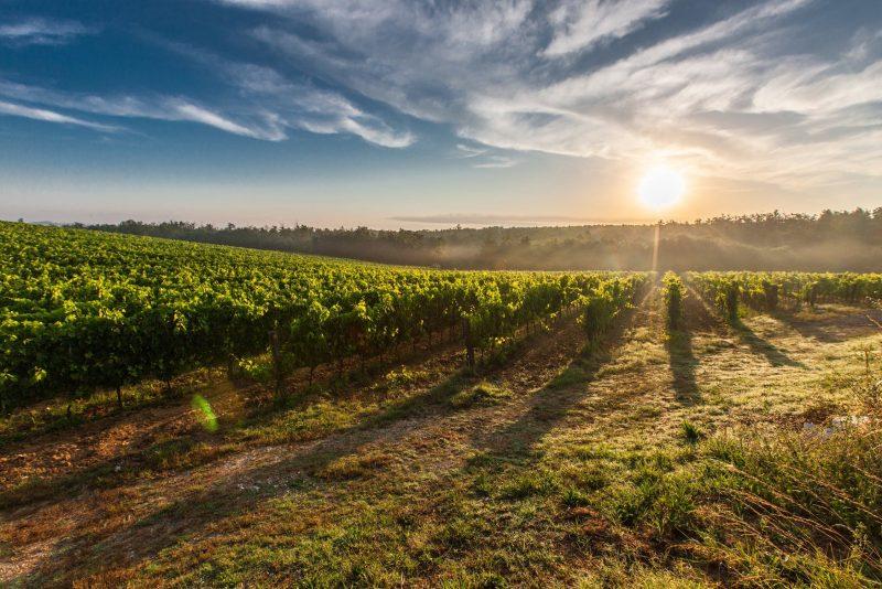Villa Cassia di Baccano - Wine Tour